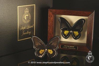 Butterfly Brooch in Cabinet