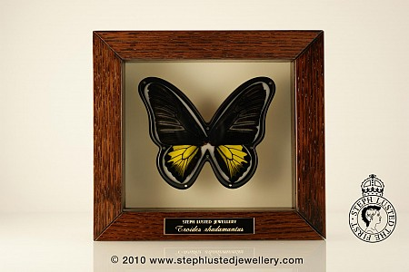 Butterfly Brooch in Cabinet - T.R